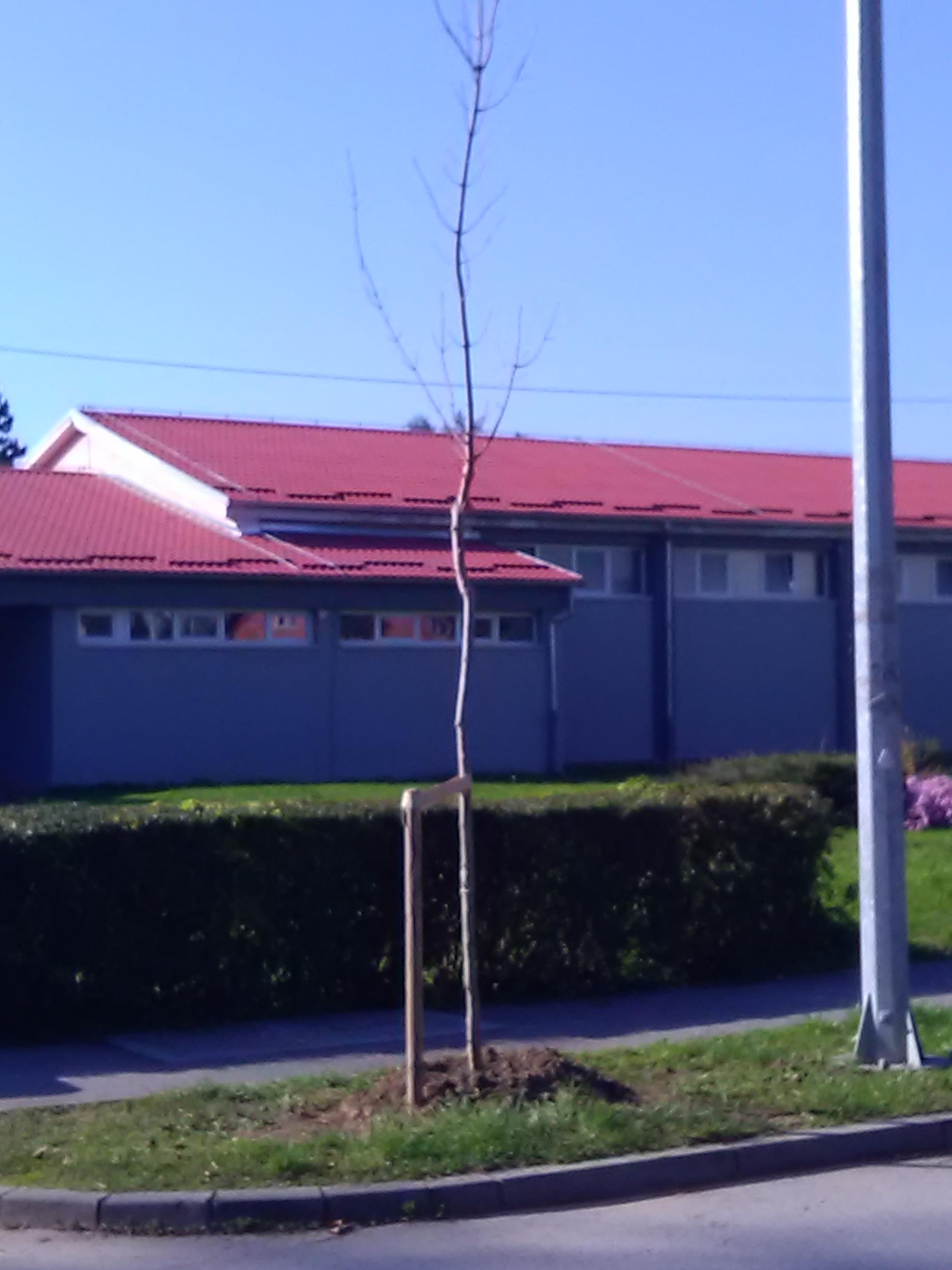 Sadnja drvoreda u vukovarskoj i frankopanskoj ulici for Mural u vukovarskoj ulici